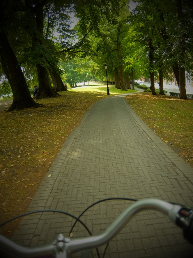 a treelined bicycle path from the point of view of cyclist