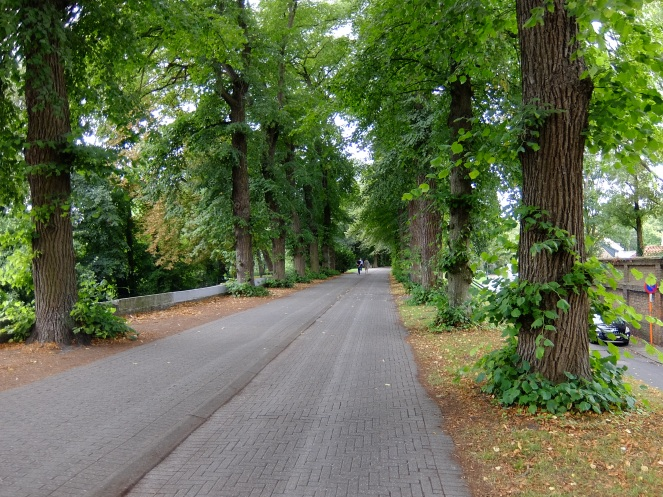 Tree lined path for cyclists