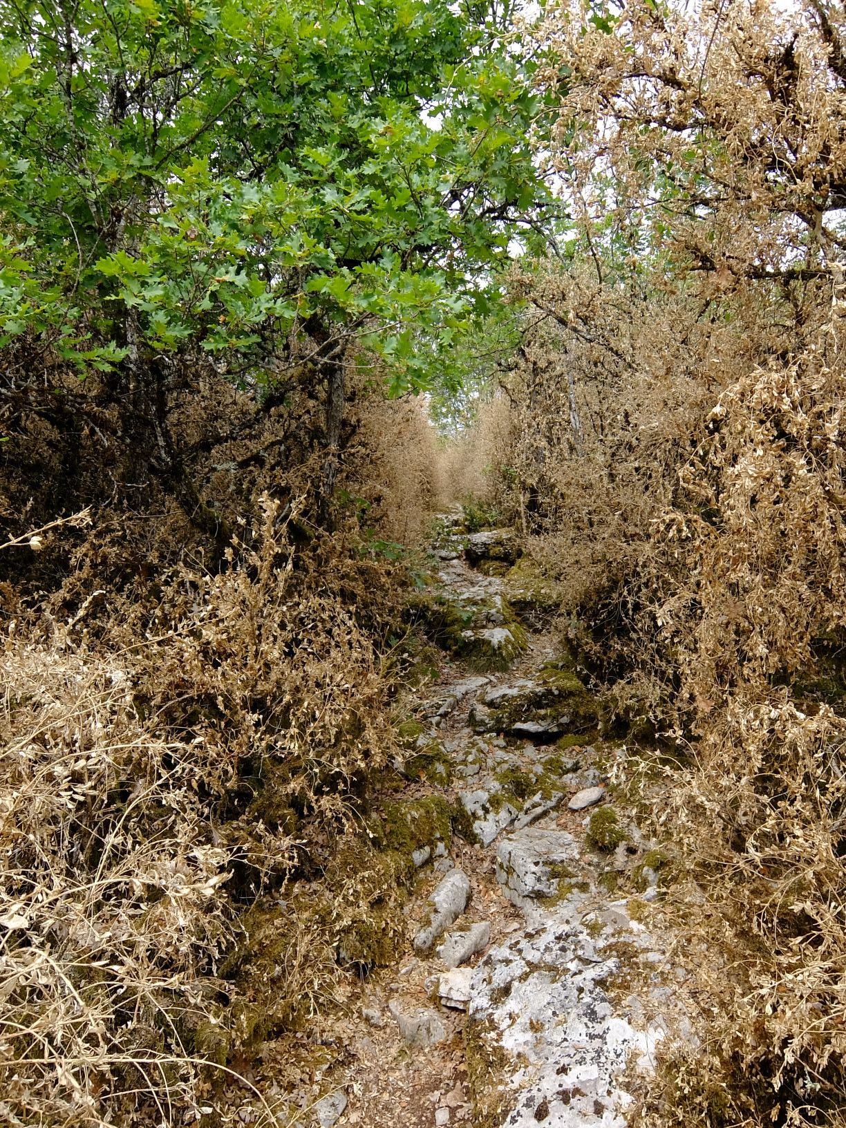 a hiking path lined with dried plants