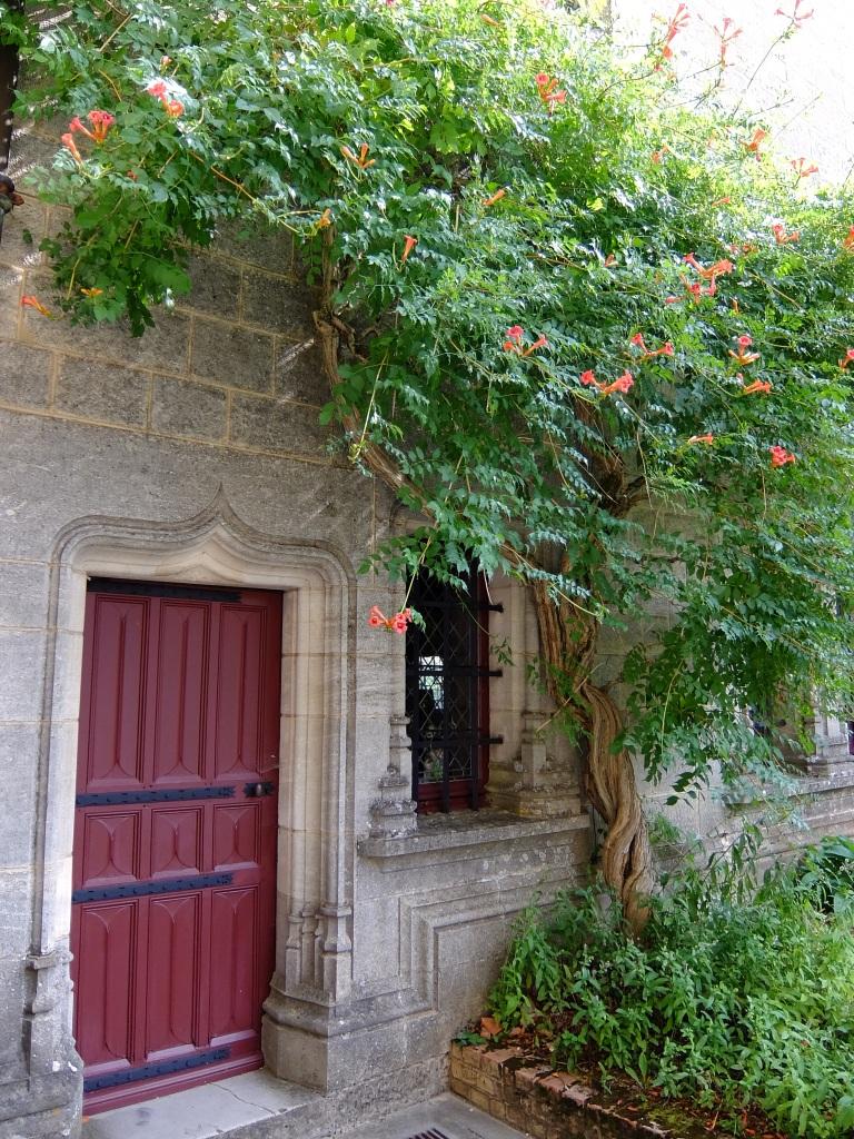 red door with vines above it