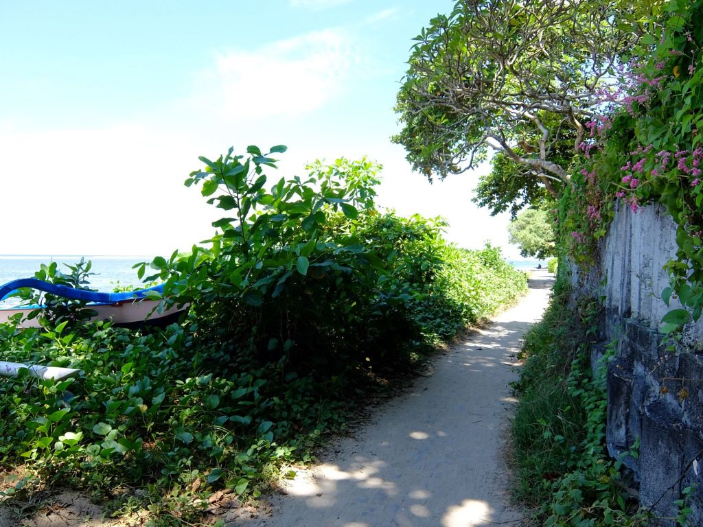 a path lined with overgrown bushes